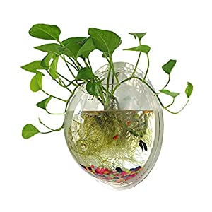Sweetsea Hanging Wall Mounted Fish Bowl Aquaponic Tank Aquariums Plant Fish Bubble - Clear (Medium) 6