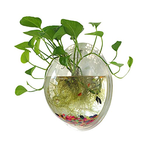 Sweetsea Hanging Wall Mounted Fish Bowl Aquaponic Tank Aquariums Plant Fish Bubble - Clear - Wall Beta Light