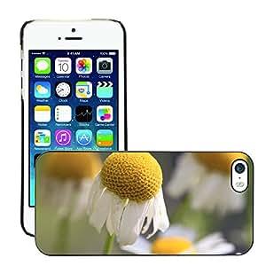 Print Motif Coque de protection Case Cover // M00290187 Flor de Manzanilla Manzanilla // Apple iPhone 5 5S 5G