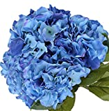 "Nikko Blue Hydrangea - 2 1/2"" Potted Shrub - 6"" - 12"" Tall Healthy Plant - 3 Pack By Growers Solution"