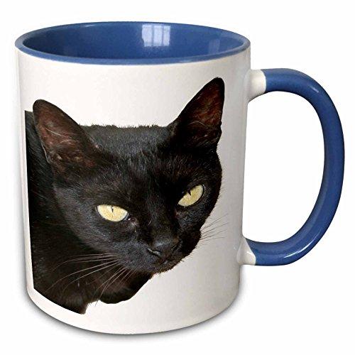 3dRose Taiche - Acrylic Painting - Cats - Kar Portrait - Black Cat Photograph, Halloween Eyes - 15oz Two-Tone Blue Mug -