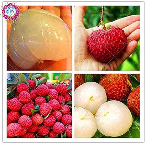 Semillas 30pcs / Bolsa gigante litchi lichi Inicio Gardenoutdoor frutales Semillas Las semillas de cannabis