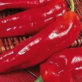 Kings Seeds - Pepper (Sweet) Long Red Marconi - 75 Seeds