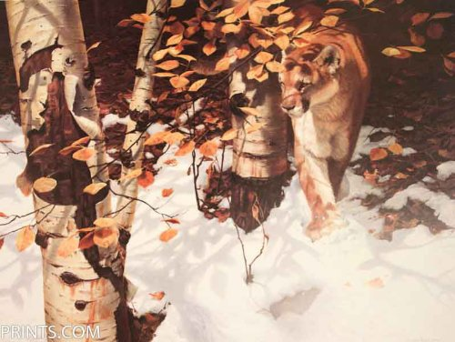 John Seerey-Lester - Early Snow - Cougar Artist