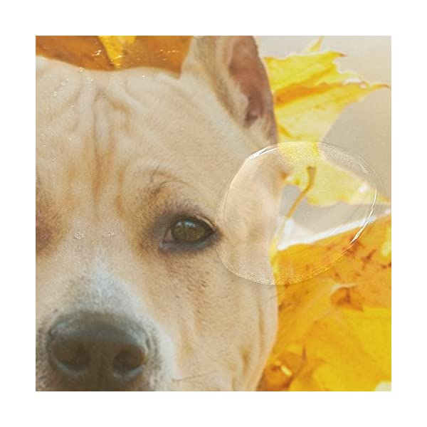 My Daily American Staffordshire Terrier Dog Wreath Shower Curtain 60 x 72 inch with Bath Mat Rug & Hooks, Waterproof Polyester Decoration Bathroom Curtain Set 4