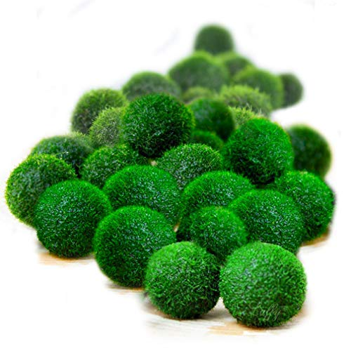 Luffy 20 Nano Marimo Moss Balls by Naturally Round and Vibrant Green 0.4'' Living Aquatic Plants - Long Lasting and Easy to Care for - Perfect as a First Pet or DIY Home Decoration by Luffy