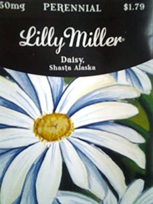 Lilly Miller Shasta Daisy Alaska Seed