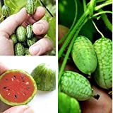 Hot 10Pcs Cucamelon Mini Watermelon Seeds Miniature Fruit Plant Home Garden BD57