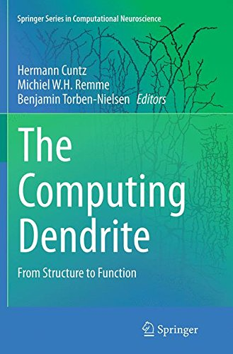 The Computing Dendrite: From Structure to Function (Springer Series in Computational Neuroscience) (Function Of Dendrites)