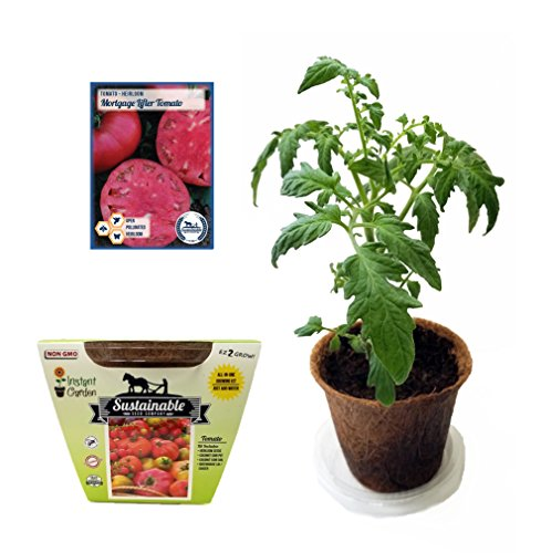 Tomato All-In-One Growing Kit, Non GMO Heirloom Tomato Seeds (Mortgage (Mortgage Kit)