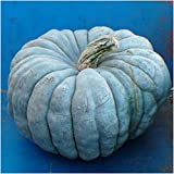 Package of 10 Seeds, Blue Moon Pumpkin (Cucurbita maxima) Non-GMO Seeds by Seed Needs