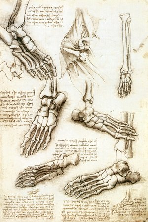 Amazon.com: Foot Anatomy by Leonardo Da Vinci Stretched Canvas ...