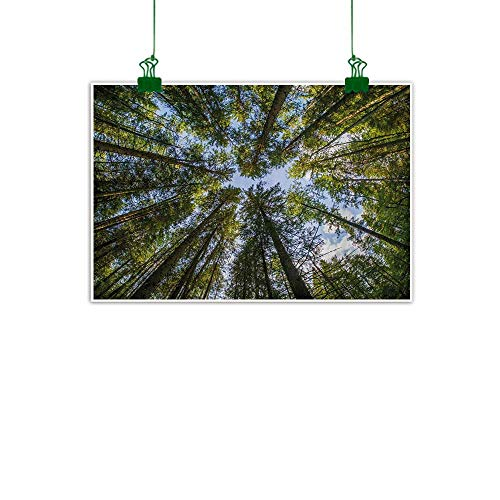 Anzhutwelve Nature,Home Decor Wall ArtWild Jungle Moss Forest Crown Trees Leaves Nature Photo Artwork Print Abstract Artwork Home Decor Sky Blue and Forest Green W 36