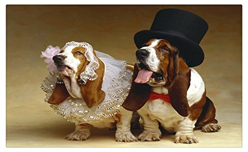 Dogs_Basset_Hound_Two_466808 Postcard Post card