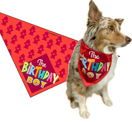 Stonehouse Collection Birthday Boy - Happy Birthday Dog Bandana - Dog Birthday Scarf Accessory - Great Dog Gift Idea (Medium to Large) -