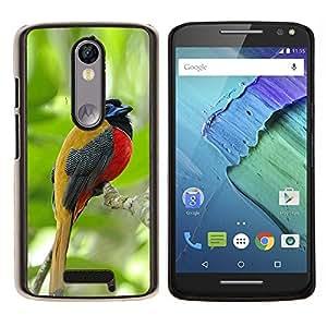 LECELL--Funda protectora / Cubierta / Piel For Motorola MOTO X3 3rd -- pájaro cantante tropical maderas de la selva verde --