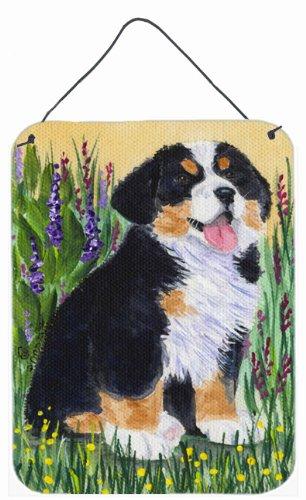 Multicolor 12x16 Carolines Treasures SS8215DS1216 Bernese Mountain Dog Aluminium Metal Wall or Door Hanging Prints