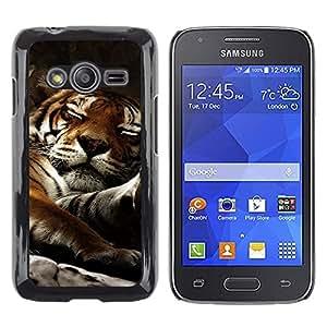 Stuss Case / Funda Carcasa protectora - Tiger Sleepy Big Cat Cute Animal Nature - Samsung Galaxy Ace 4 G313 SM-G313F