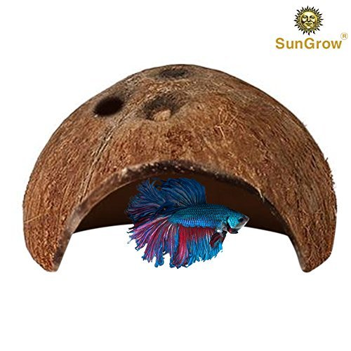 Coconut Shell Half (SunGrow Betta cave - Natural Habitat Made from Coconut Shells - Soft-Textured Smooth Edges & Spacious Hideout for Betta Fish to Rest and Breed (Natural Coco Cave (1-Pack)))