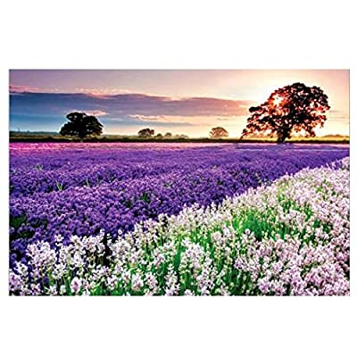 Puzzles for Adults – 1000 Piece Lavender Jigsaw Puzzle - Floral Puzzle - Europe Puzzle - Adults Children Educational Puzzles Games - Scenic Jigsaw - Nature Puzzle: Toys & Games