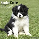 Border Collie Puppies Calendar - Dog Breed Calendars - 2017 - 2018 wall Calendars - 16 Month by Avonside
