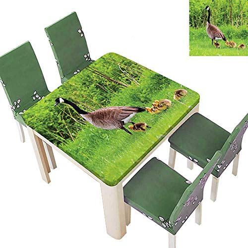 Printsonne 100% Polyester Tablecloth Canadian Goose Chicks SPR Summer Wild Nature Scenic Picture Green Resistant and Waterproof 50 x 50 Inch (Elastic Edge) -