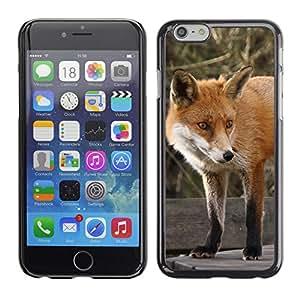 Carcasa Funda Case // Fox V0000176// iPhone 6Plus 5.5