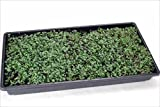 "100 Plant Growing Trays (No Drain Holes) - 20"" x"