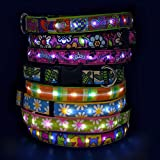 Hot Dog Safety Collar - Medium-Diva Dog US Made LED LIght Up Collar With Rechargeable Battery