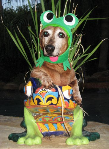 [Infrognito! frog costume hat for dogs and cats (Lg-Xlg (16-24