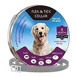 Best Dog Ticks - Pet Deworming Collar, Guard Flea And Tick Collar Review