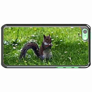 iPhone 5C Black Hardshell Case squirrel grass sitting small animal Desin Images Protector Back Cover by runtopwell