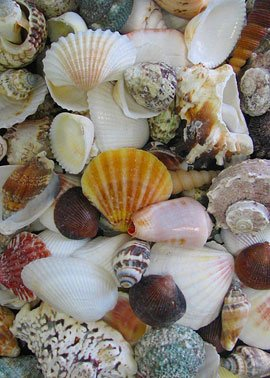 - Serene Spaces Living Assorted Mixed Shells