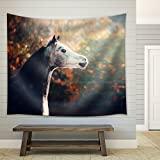 wall26 - Beautiful Arabian Horse with Whitehead on Wonderful Nature Background - Fabric Wall Tapestry Home Decor - 51x60 inches