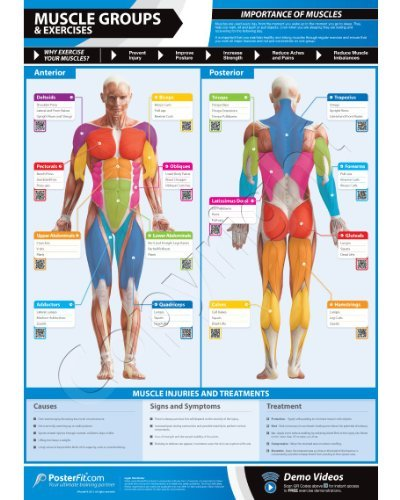 Muscle Groups & Exercises Gym Poster - 33.5' X 24' - Laminated with on-line video training support (smart phone only)