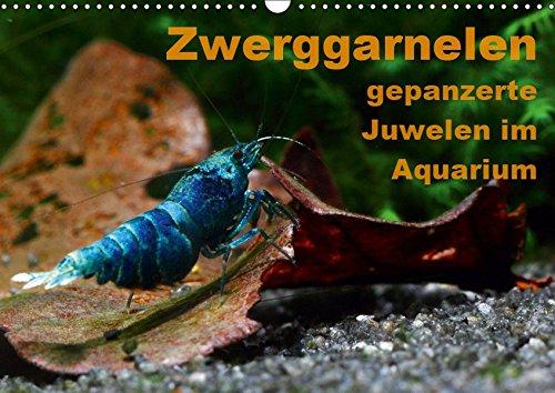 Zwerggarnelen – Acuario Juwelen im – EIN Jahr Lang jeden Monat eine wunderschöne Garnele (calendario de pared 2019, 14...