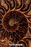"""Notebook: Brown Ammonite , Journal for Writing, College Ruled Size 6"""" x 9"""", 110 Pages"""
