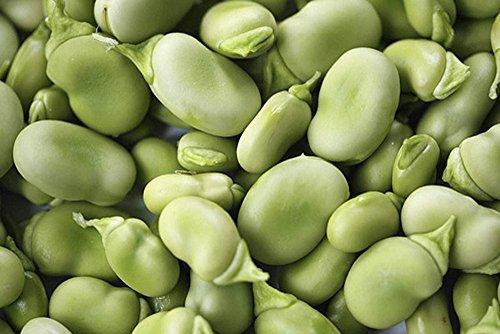 BEAN, FAVA WINDSOR BUSH, HEIRLOOM, ORGANIC 100 + SEEDS, NON-GMO, BUTTERY N HEALTY BEANS