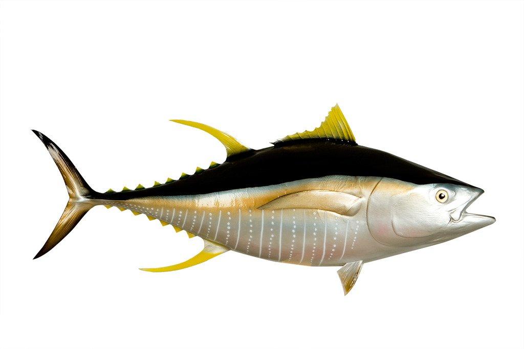 55'' Yellowfin Tuna Half Mount Fish Replica, Fishing Wall & Coastal Decor