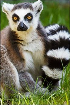 Mind Blowing Cute Ring Tailed Lemur Journal: 150 page lined journal