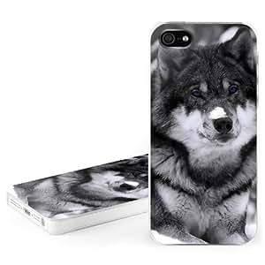Caso duro para Apple iPhone 5 - lobo