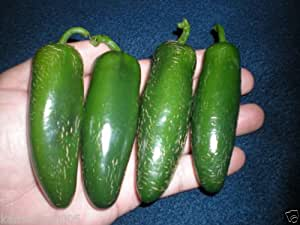 (1000) Grande Jalapeno SeedsWHOLESALEHuge and Hot