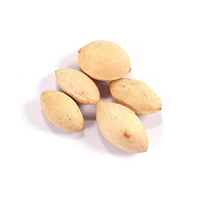 C-Pioneer 10pcs Rare Nut Tree Pistachios Seeds Fruit Tropical Plant Nut Tree Seed : Garden & Outdoor