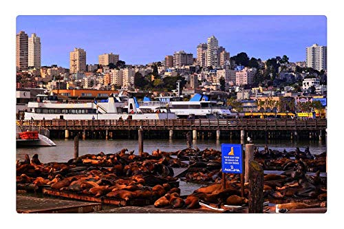 Tree26 Indoor Floor Rug/Mat (23.6 x 15.7 Inch) - San Francisco California Pier 39 Seal ()