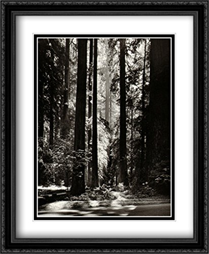 Redwoods, Founders Grove 2x Matted 28x34 Large Black Ornate Framed Art Print by Adams, Ansel