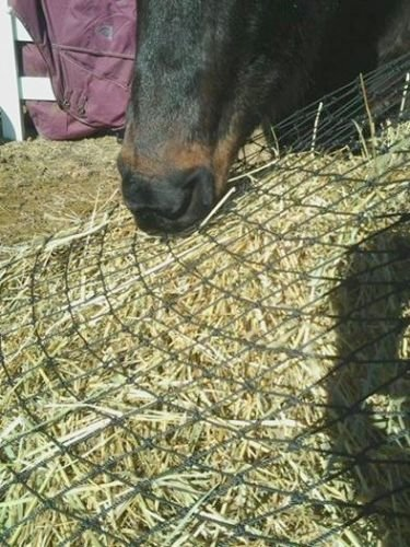 The 8 best horse hay nets for round bales
