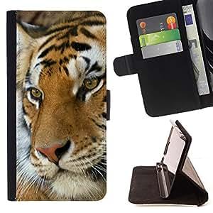 BullDog Case - FOR/Apple Iphone 5C / - / tiger cute feline animal orange Africa /- Monedero de cuero de la PU Llevar cubierta de la caja con el ID Credit Card Slots Flip funda de cuer