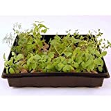 "Plant Germination Drip Trays - 10"" by 10"" Black"