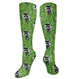 CUUOP13 Raccoons - Painting Grass Unisex Compression Socks Foot Long Socks Sport Soccer Mesh Tube Socks for Running,Nurses, Shin Splints,Travel,Flight,Pregnancy & Maternity