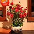 New Fresh 200 pcs/Pack Big red Carnation Seeds Balcony Potted Courtyard Garden Plants Dianthus caryophyllus Flower plantas